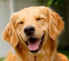big smile for dog lovers!