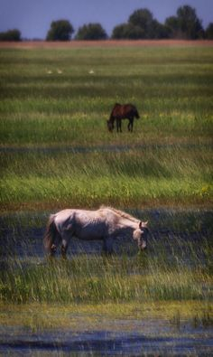 Horses in Letea Forest - Danube Delta Danube Delta, Famous Castles, Wild Mustangs, Horse World, All The Pretty Horses, Galapagos Islands, Great Barrier Reef, Horse Breeds, Wild Horses