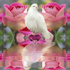 1 million+ Stunning Free Images to Use Anywhere Beautiful Gif, Beautiful Roses, Beautiful Pictures, Pretty Birds, Pretty In Pink, Vogel Gif, Gif Bonito, Bird Gif, Glitter Graphics