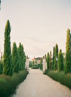 Tree Lined Path at the Borgo Santo Pietro | photography by http://www.ktmerry.com/blog/