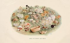 Toadstools, mushrooms, fungi, edible and poisonous;. Indianapolis,The Bowen-Merrill Company[c1902].