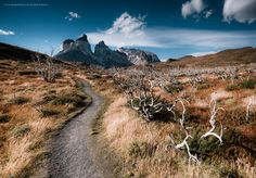 pinterest.com/fra411 #places - Queens of Andes on Behance - TORRES DEL PAINE NATIONAL PARK