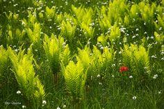 swamp vegetation by Sky-Genta, via Flickr
