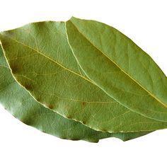 A ars o funza de dafin in camera. Iata ce efecte a avut! - Revista Teo Plant Leaves, Medical, Plants, Cooking Gadgets, Tricot, Medicine, Plant, Med School, Planets