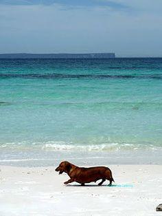 Dog on beach :-) Looks like my ole dog Snoopy, but a little heavier.