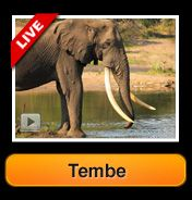 Africam | A Live 24x7 Interactive African Wildlife Safari