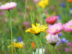 Farbschema für's Wohnzimmer: grassgrüne Grundlage, gelbe, orange und lila/rosa Akzente
