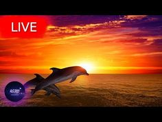 🔴 Deep Sleep Music, Calm Music, Sleep Meditation, Relaxing Music, Yoga, Study Music, Sleep MusicWelcome everyone! I hope your are having an amazing Day/Night! Get back loosen up your body take a deep breath and enjoy my music with the beautiful imagery from all around the world!   All music composed by Astro Universe - Relaxing Music  If you are an insomniac and suffer regularly with insomnia  use this sleeping music in the background as calm music for soothing relaxation or as ambient… Deep Sleep Music, Take A Deep Breath, Relaxing Music, Insomnia, I Hope You, My Music, Meditation, Stress, Universe