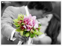 Pink & green cymbidium orchids