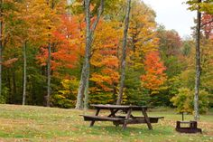 Vibrant orange, yellow and red autumn-colored leaves are a background for a campsite at Cherry Springs State Park, Pennsylvania.