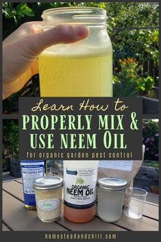 How to Properly Emulsify Neem Oil & Make a Safe Garden Pest Spray Discover what neem oil is, how it works, and what pests it fights. Most importantly, learn how to properly emulsify neem oil to create an effective, non-toxic spray for your garden. Organic Gardening, Gardening Tips, Organic Farming, Urban Gardening, Gardening Supplies, Vegetable Gardening, Container Gardening, Pest Spray, Citrus Trees