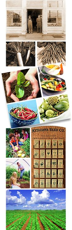 Asian Vegetable Seeds, Oriental Vegetables Seed | Kitazawa Seed Company (Variety is the spice of life)