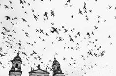 VSCO - Just a few more hours #homebound #colombia #b&w #bogota | salomon81