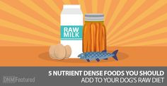 5 Must Have Ingredients To Add To Your Dog's Raw Food Diet. The Importance of Nutrient Dense Foods In Your Dog's Raw Food Diet.