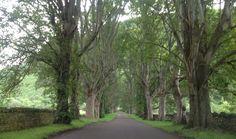 Beautiful lane Ullapool, Scotland