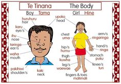The Body Bilingual Chart | Te Reo Maori Resources