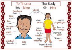 The Body Bilingual Chart | Te Reo Maori Resources