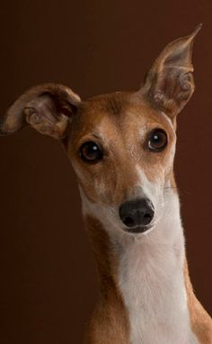 Dog Portrait by Paul Croes