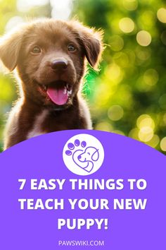 Toilet training the right way. Get the facts now. Puppy Training Classes, Online Dog Training, Best Dog Training, Puppy Care, Dog Care, Dog House Kit, Dog Food Delivery, Online Pet Store, Dog Potty