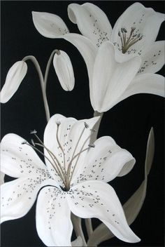 Ivory Lilies - Acrylic on chunky Box Canvas Original Paintings, Original Art, Lily Painting, Plant Wallpaper, Decoupage, Acrylic Flowers, Acrylic Painting Tutorials, Botanical Drawings, Art Drawings Sketches
