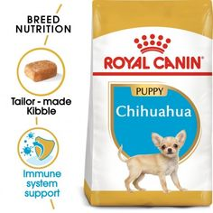 chihuahua puppy Raza Chihuahua, Chihuahua Puppies, Pet Online, Food Meaning, Physical Change, 8 Month Olds, Dry Dog Food, Small Dogs, Immune System
