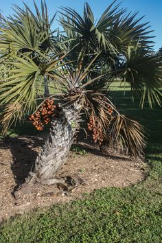 Fruit & Spice Park, Homestead, Florida www.stephentravels.com/top5/botanic-gardens