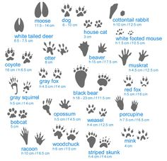 Animal tracks guide - good to know while camping and RV Living Camping Survival, Outdoor Survival, Survival Tips, Survival Skills, Survival Quotes, Bushcraft Skills, Wilderness Survival, Bushcraft Camping, Survival Watch