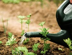 May Gardening Checklist | Roger's Gardens Vegetable Garden For Beginners, Gardening For Beginners, Gardening Tips, Gardening Supplies, Succession Planting, Modern Garden Design, Garden Quotes, Organic Vegetables, Brighten Your Day