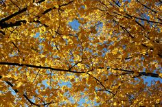 Autumn Leaves Song - - Pinned by #PediaStaff.  Visit http://ht.ly/63sNt for all our pediatric therapy pins
