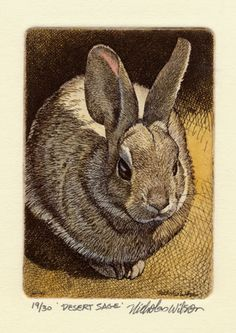 Nicholas Wilson Original Etching of Rabbit DESERT door tjstortuga