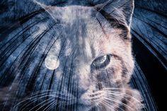 月の瞳 - hiro