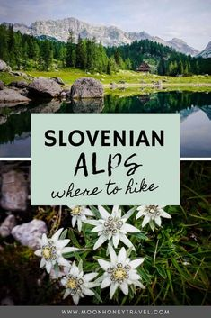 Slovenian Alps: Top Hiking Destinations in the Slovenian Mountains Visit Slovenia, Slovenia Travel, Hiking Trails, Hiking Guide, Backpacking Tips, Bohinj, Julian Alps, Lake Bled, Mountain Hiking