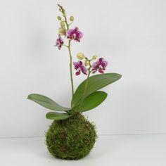 Vase illusion d 39 eau roses blanches fleur artificielle 40cm for Amaryllis fleurs cesson
