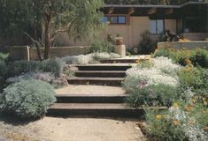 Simple pattern of timber steps, decomposed granite paving, and rammed earth walls—all local materials—connect house and garden to the region. (Author's garden, Martinez)