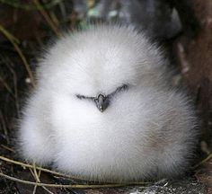 Looks like a little cotton puff!