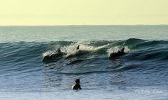 Swimming with dolphins Bay News, Dolphins, Photo S, South Africa, Places To Go, Wildlife, Waves, Swimming, Ocean
