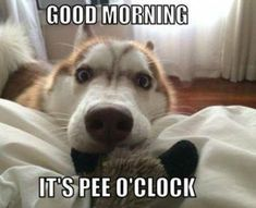 Does your dog wake y