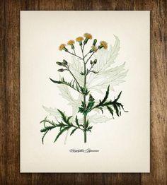 Yellow Flower Vintage Botanical Print by Printed Vintage on Scoutmob Shoppe