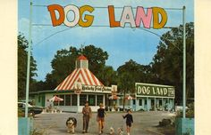 "KENTUCKY FRIED DOG  DOG LAND The only permanent ""dog exhibition"" in the world where dog lovers can see a good representative of practically every breed of dog in the United States and five foreign countries. Each dog has his own individual house and adjoining run built to resemble a motel. Each dog has a dry room, for wet or cold weather, and sun porch for sunny days. We have the most widely assorted gift shop in Florida for doggie items and personalized objects. We have also ceramics and…"