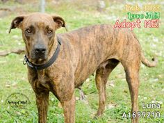 LUNA located in Miami, FL has 4 days Left to Live. Adopt her now!