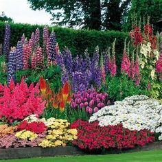 Perennials for shade by Jinx