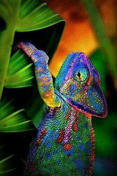 Love spells psychic medium consultant and voodoo spells Call/whatsapp +27786966898 Email: info@drraheemspells.com/drraheem22@gmail.com  visit: http://www.drraheemspells.com  https://www.linkedin.com/in/kiteete-raheem-09525a153/  https://plus.google.com/113935548839385207758  https://za.pinterest.com/drraheem/  https://twitter.com/drraheem22  https://vimeo.com/psyschicraheem  https://www.flickr.com/people/148873604@N04/  https://www.facebook.com/psychicraheem1  https://remote.com/drraheem…