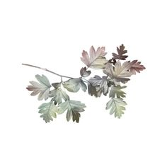 element17.png ❤ liked on Polyvore featuring leaves, cvece, filler and flowers
