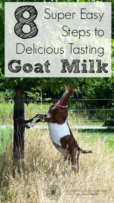 "Goat Milk Taste Like Cow Milk Homesteading - The Homestead Survival .Com ""Please Share This Pin""Make Goat Milk Taste Like Cow Milk Homesteading - The Homestead Survival .Com ""Please Share This Pin"" Keeping Goats, Raising Goats, Raising Chickens, Raising Farm Animals, The Farm, Mini Farm, Goat Milk Recipes, Goat Care, Nigerian Dwarf Goats"