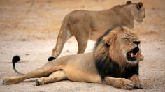 Wildlife prices are tumbling in South Africa, as game breeders are squeezed by restrictions imposed on trophy hunting following the killing of Cecil the lion in 2015, and the worst drought on record forced farmers to sell animals.