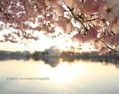 Cherry Blossom Photography Washington DC by IllustrationsByMark