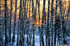 Восход солнца в Зимнем лесу