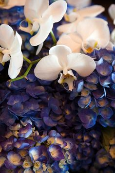 White orchids rest on an arrangement of purple hydrangeas.