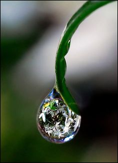 drop of clematis by Steve Wall took it, via Flickr