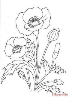 Вышивка лентами.Мои мастер- классы. Silk Ribbon Embroidery, Embroidery Patterns, Hand Embroidery, Flower Coloring Pages, Colouring Pages, Fabric Painting, Painting & Drawing, Floral Drawing, Poppy Drawing